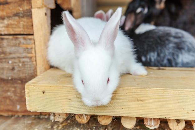 Beaucoup de petits lapins de l'alimentation différents sur la ferme des animaux en huche à lapins