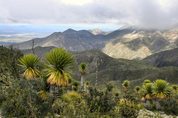 Beaucoup de plantations de palmiers nains verts sous le beau ciel nuageux
