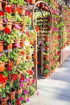 Beaucoup de plantes en poterie fleuries suspendus à la façade de la maison dans la rue
