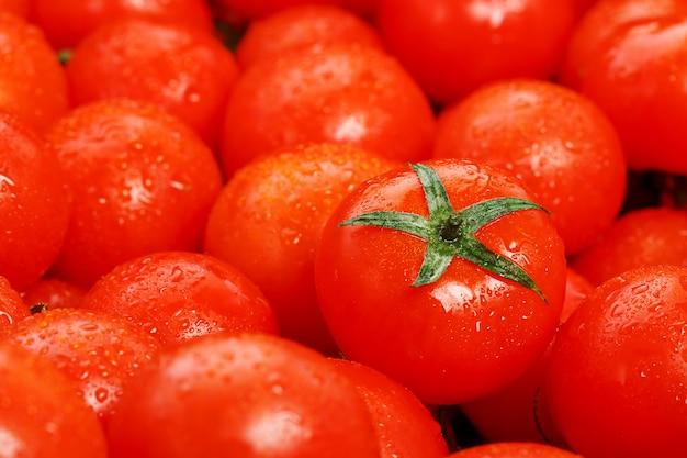 Beaucoup de tomates mûres fraîches avec des gouttes de rosée.