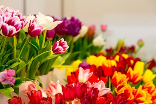 Beaucoup de tulipes fraîches d'affilée