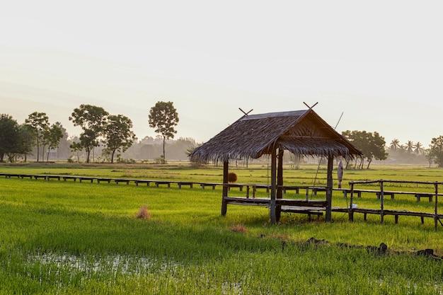La beauté des chalets et des rizières le matin.