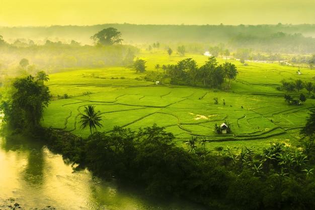 Beauté dans les champs kemumu nord bengkulu indonésie