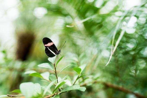 Beauté dans la nature. papillon sur la feuille.