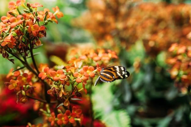 Beauté dans la nature. papillon sur des fleurs orange.