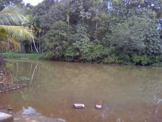 La beauté du kerala, dans la jungle