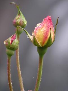 Beauté d'une fleur, des plantes