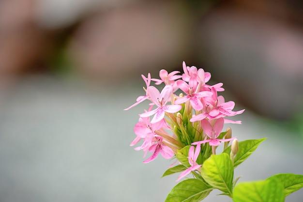 La beauté des fleurs roses sur le fond flou.