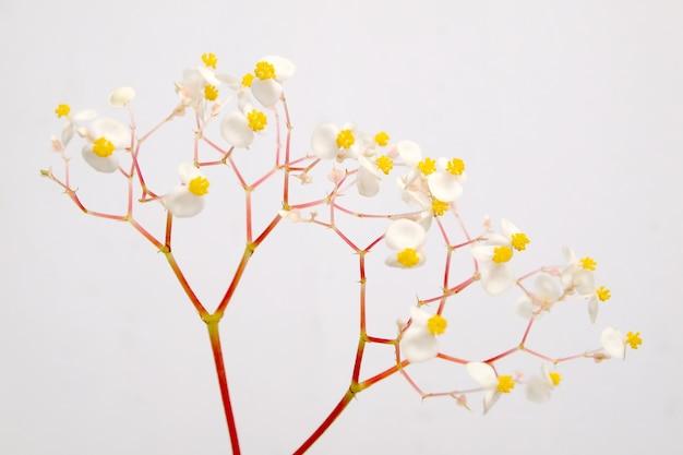 La beauté des fleurs