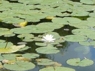 Beauté naturelle des jardins cachés lac, paysage, lac