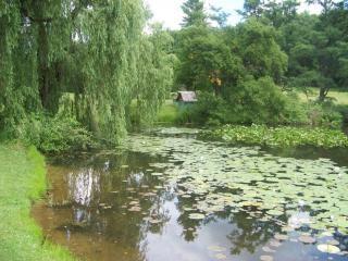 Beauté naturelle des jardins du lac caché, l'été