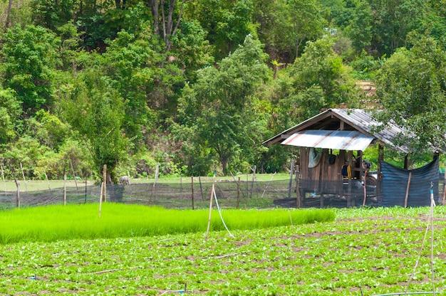 Beauté paysage agricole pittoresque