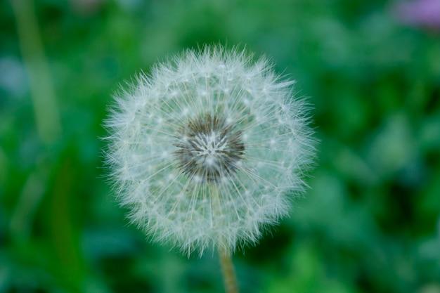 Beauté pollen au jardin