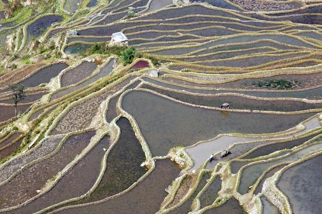 La beauté des rizières en terrasses yuan yang, chine.