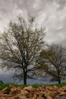De beaux arbres avec des colos d'automne .