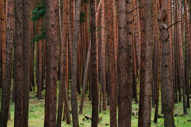 Beaux arbres de la forêt de fées