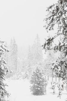 Beaux bois dans la forêt d'hiver
