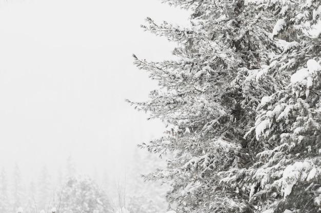 Beaux bois gelé en forêt