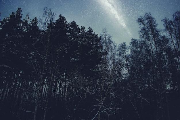 Beaux bouleaux la nuit contre le ciel étoilé bleu et la voie lactée. fond de paysage de nuit.