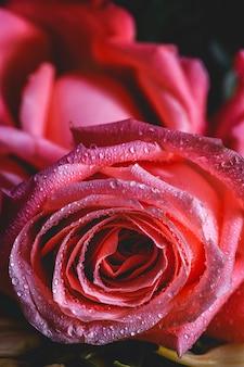 Beaux bouquets de fleurs fraîches de printemps