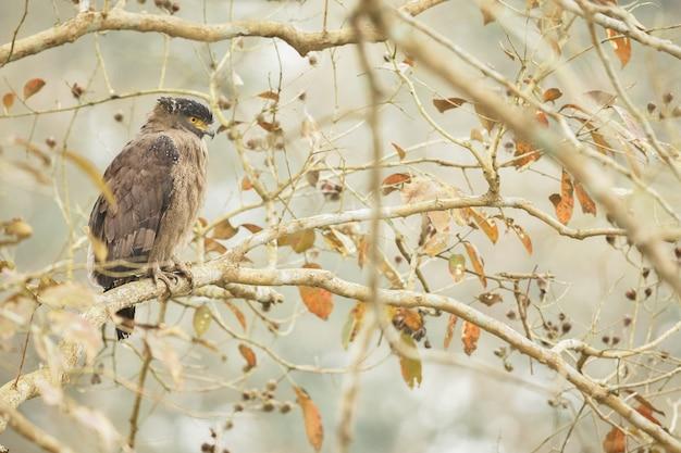 Beaux et colorés oiseaux de kaziranga en inde assam