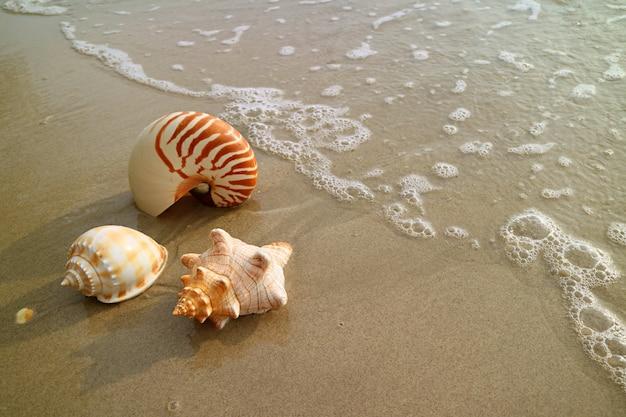 Beaux coquillages naturels sur la plage de sable humide avec lavage à contre-courant, thaïlande