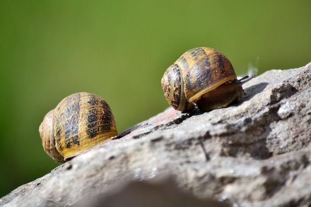 Beaux escargots rock amour mignon