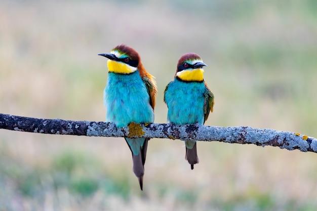 Beaux oiseaux colorés perchés sur une branche