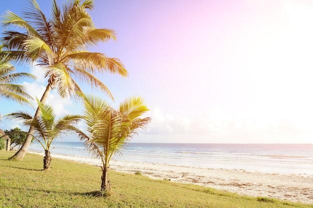 Beaux palmiers à la plage au coucher du soleil