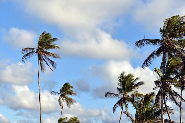 Beaux palmiers verts contre le ciel bleu