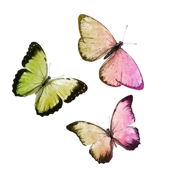 Beaux papillons tropicaux isolés