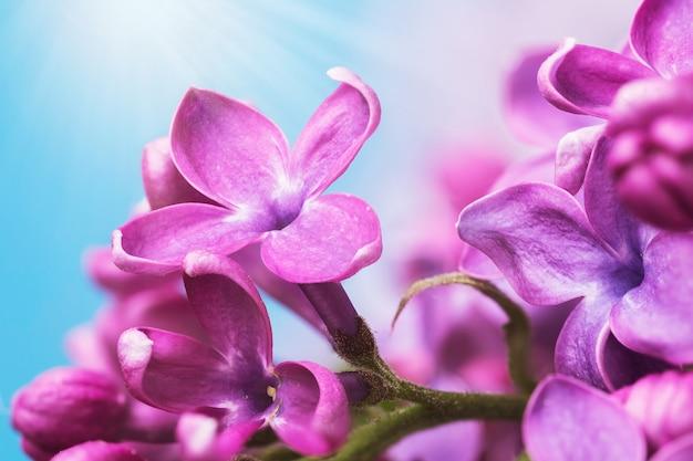Beaux pétales de lilas contre le ciel bleu