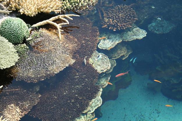 Beaux et petits poissons colorés nageant dans le réservoir