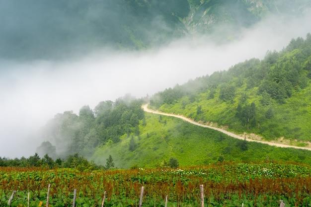 Beaux pins sur les hautes montagnes brumeuses. artvin, turquie