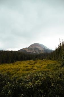 Beaux pins et montagne