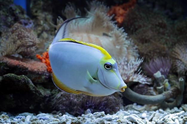 Beaux poissons marins sur les récifs coralliens