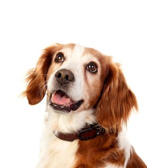 Beaux portraits d'un chien