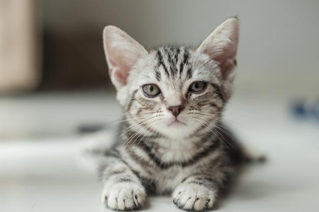 Bébé chat assis sur le sol dans la maison et se tourne vers le propriétaire