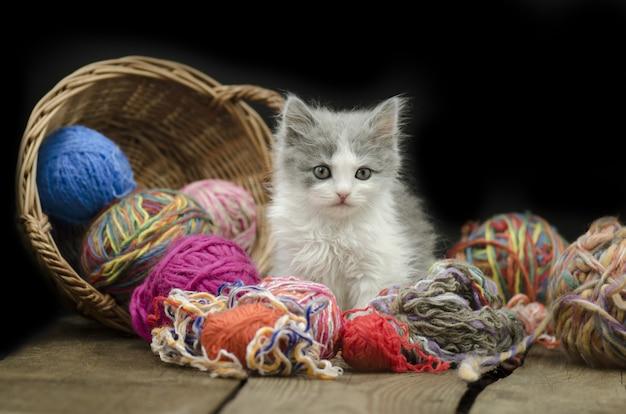 Bébé chaton jouant avec du fil de balle
