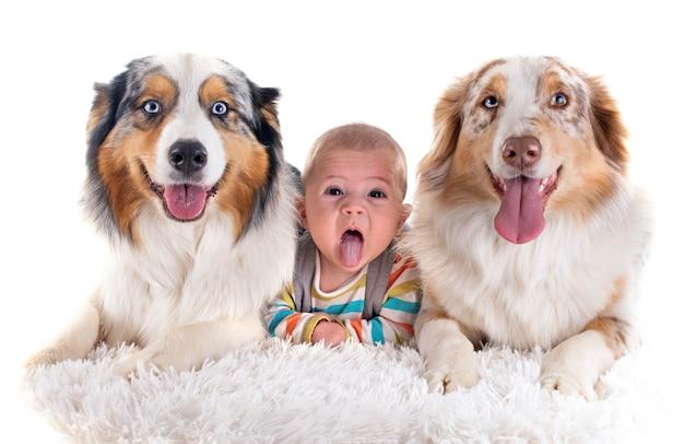 Bébé et chiens