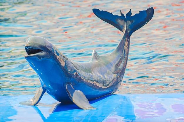 Bébé dauphins jouant