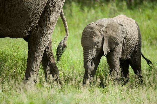 Bébé éléphant et sa mère