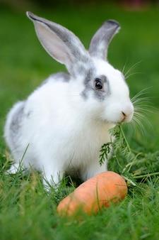 Bébé lapin dans l'herbe. jour d'été
