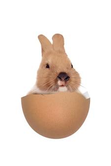 Bébé lapin dans les œufs cassés isolés. joyeuses pâques