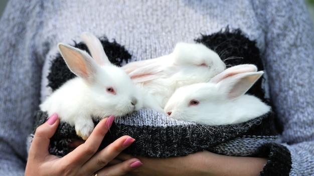 Bébé lapins blancs à la main