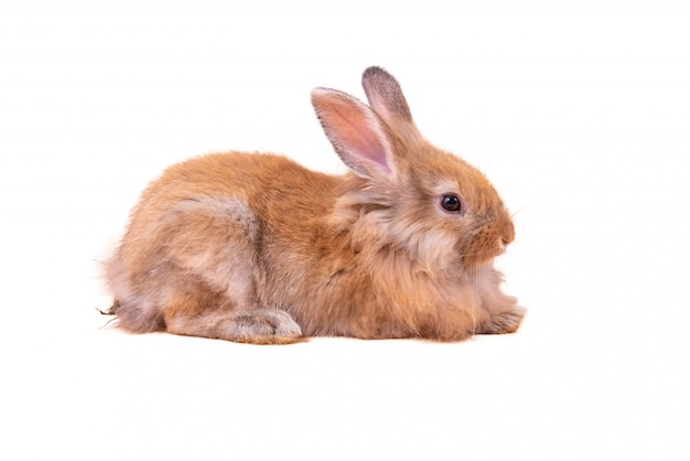 Bébé lapins mignons