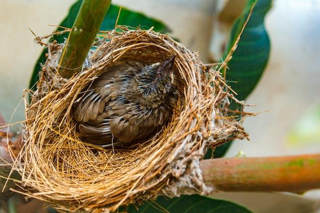 Bébé oiseau au nid chez les gens.