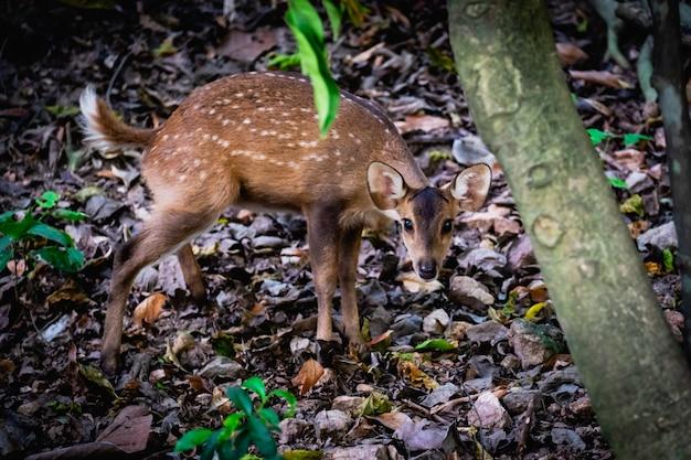 Bébé sauvage cher dans la forêt