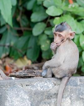 Bébé singe brun mange de la gelée