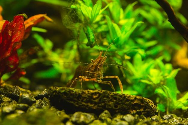 Bel aquarium avec une abondance de plantes et d'habitants du monde sous-marin.